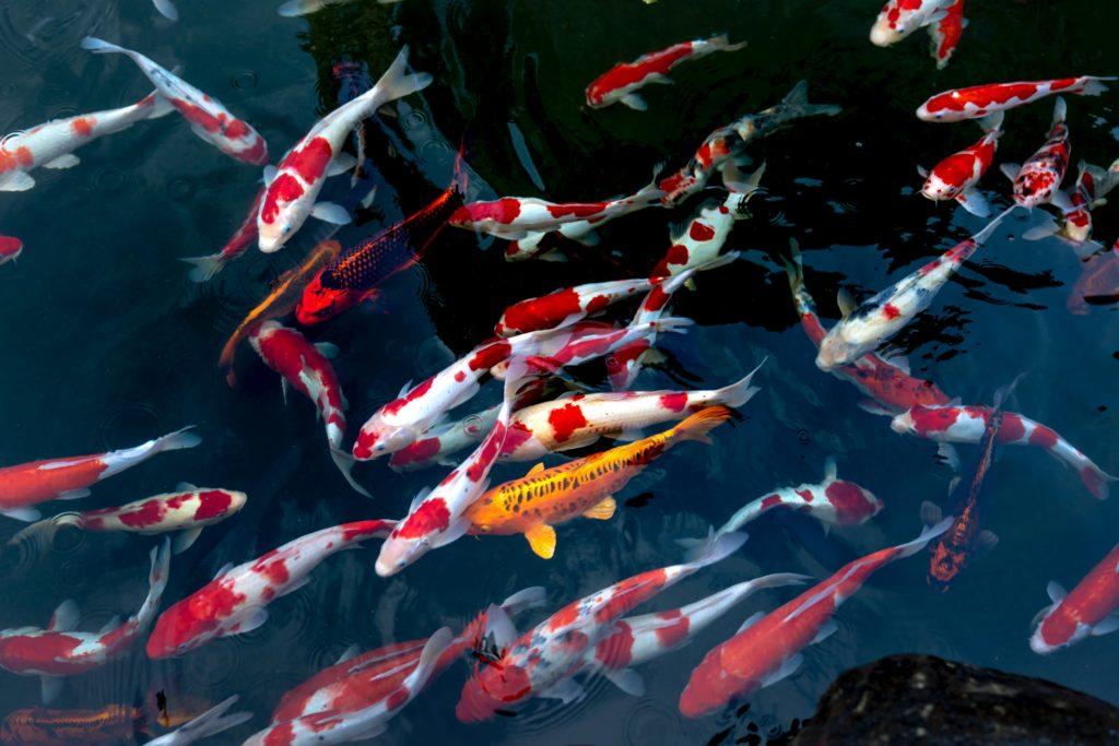 Сон о рыбе предсказывает беременность