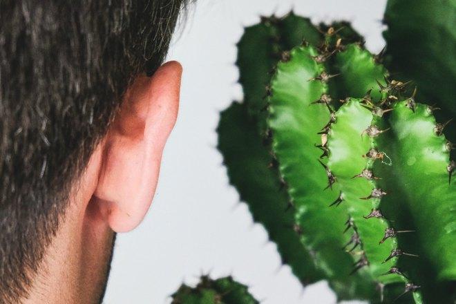Ухо и кактус