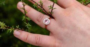 кольцо в хвойном дереве