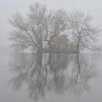 отражение дерева