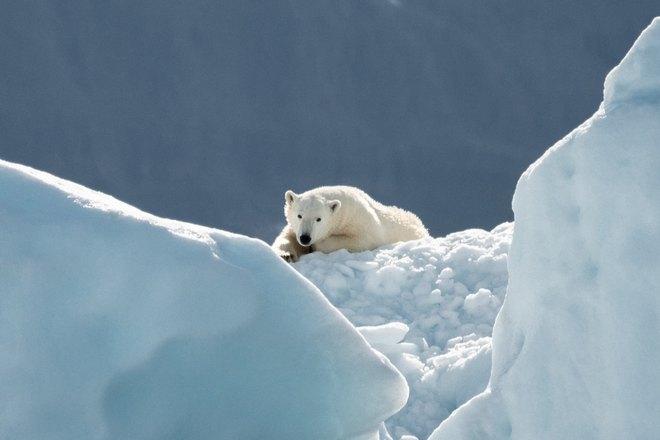 Медведь в окружении снега