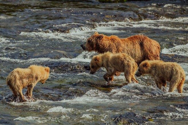 Четыре медведя