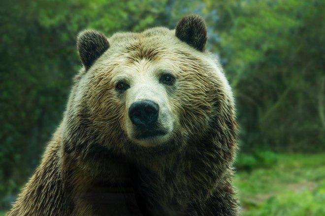 Взгляд медведя