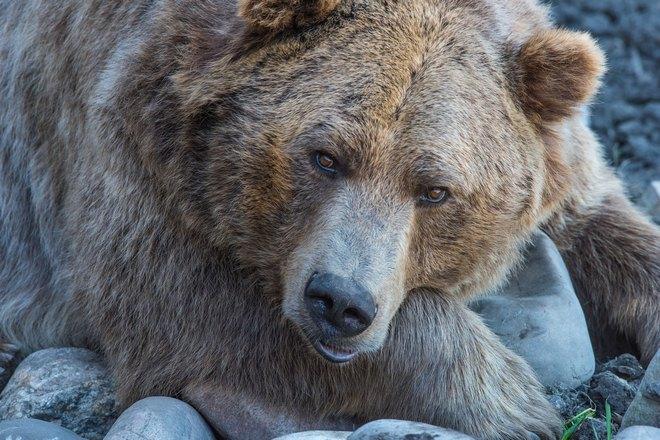 Убить медведя непросто