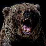 Страшный медведь