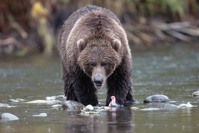 Медвеь склонился над водой