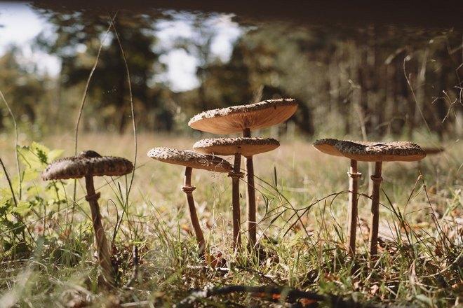 Сон о незнакомых грибах
