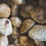 Приснились белые грибы