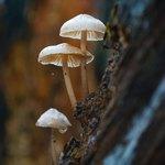 Приснились светлые грибы