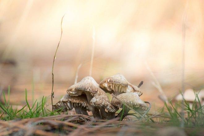 Сон о нескольких грибах