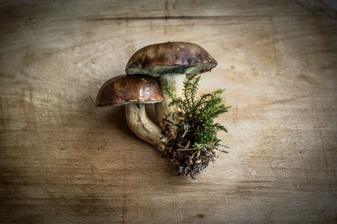 Приснились съедобные грибы