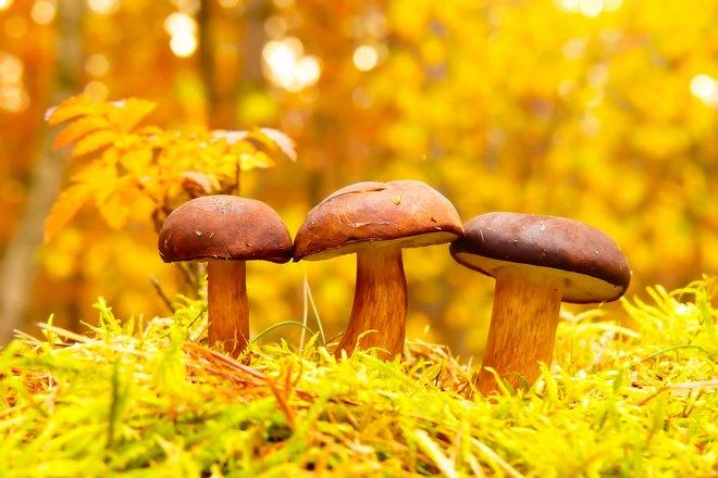 Приснилось три гриба