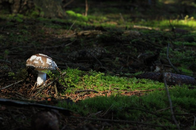 Приснился крупный гриб