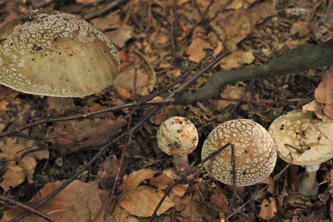 Снятся лесные грибы