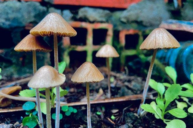 Сон о грибах