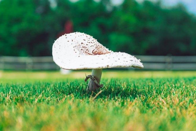 Снится одинокий гриб