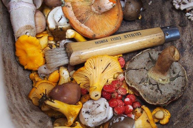 Снятся собранные грибы