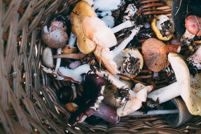 Снятся грибы в корзинке