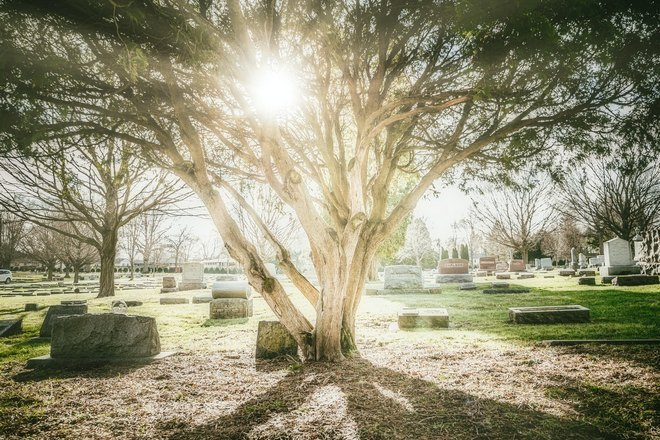 Большое дерево на кладбище