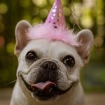 День рождения у собачки