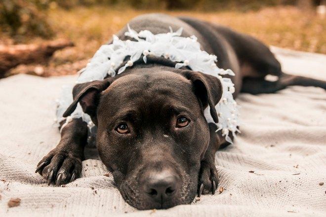 Приснилась плачущая собака