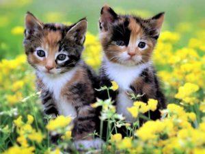 Разноцветные малыши котята