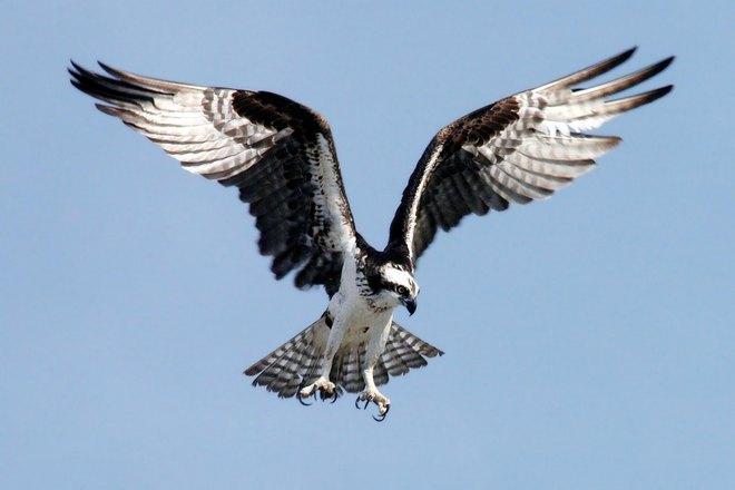 Парящий в небе орел