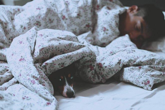 Мужчина спит, а собака выглядывает из-под одеяла