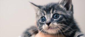 беззащитный котенок