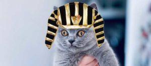 древнеегипетский котенок