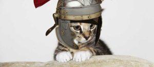 древнеримский котенок