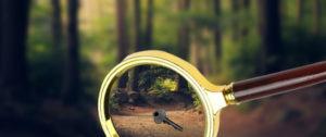 ключ в лесу
