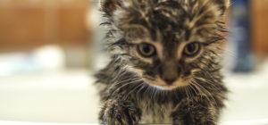 котенка помыли