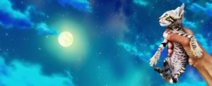 котенок на фоне луны