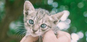котенок с блестящими глазами