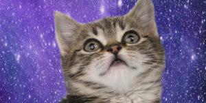 котенок в космосе