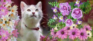 котенок в цветах смотрит вверх
