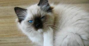 котик чешется