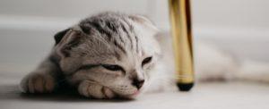 котик дремает