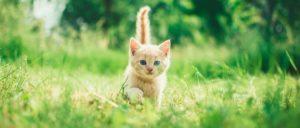котик странник