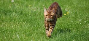 котик убегает