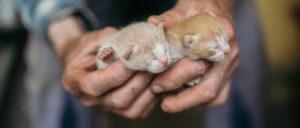 крошечные котятки