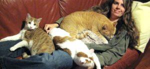 замужняя девушка с котами