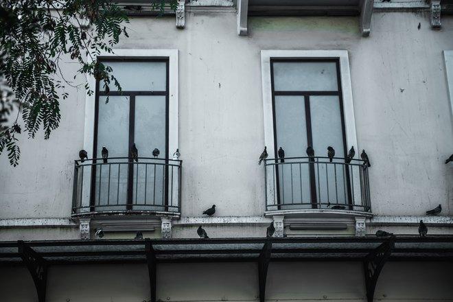 Голуби под окнами