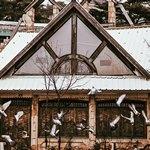 Группа птиц рядом с окнами