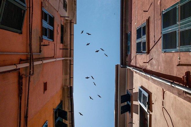 Птицы над двумя зданиями