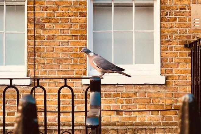 Птица возле белого окна