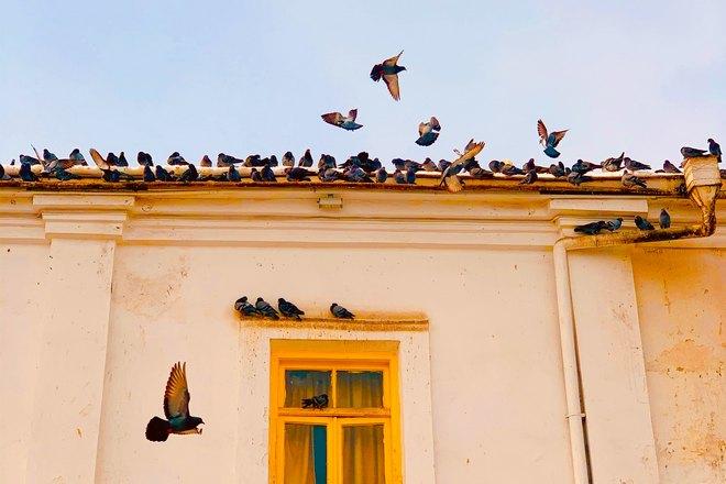 Много птиц и 1 окно