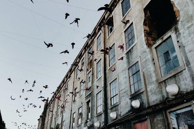 Много птиц возле окон