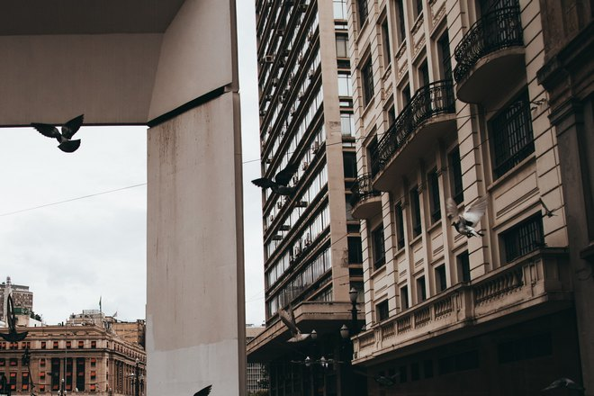 Птицы возле офисного здания